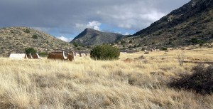 The Life, and Death, of a Rancher
